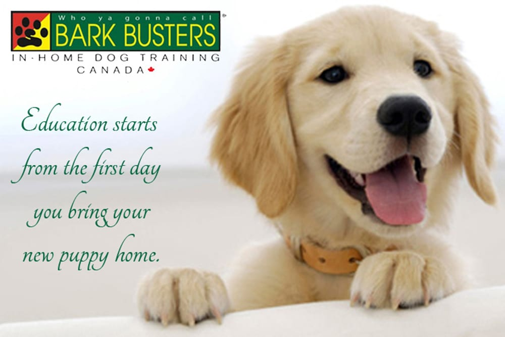 Education starts from the first day you bring your new puppy home ~ call Bark Busters