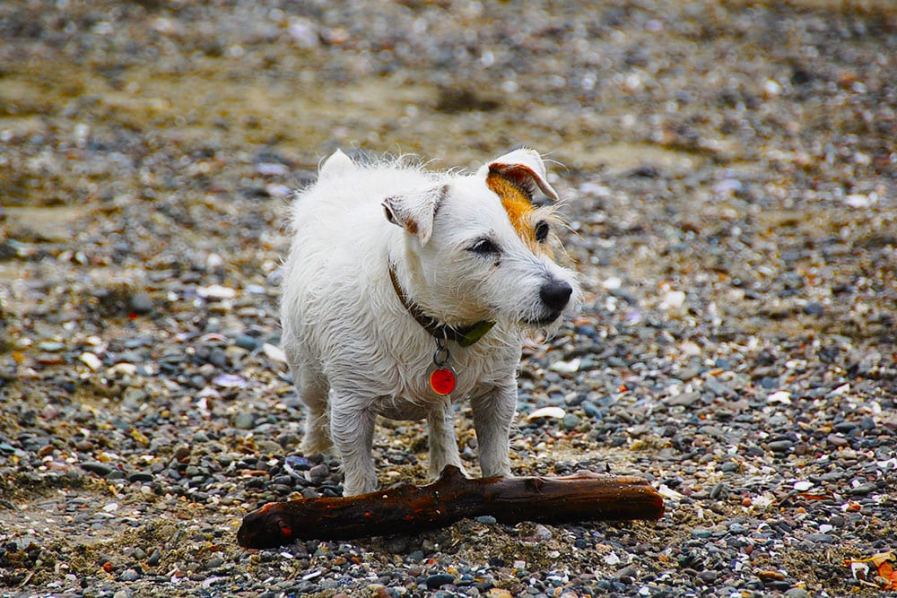 Even old dogs can learn from Barkbusters in home dog training