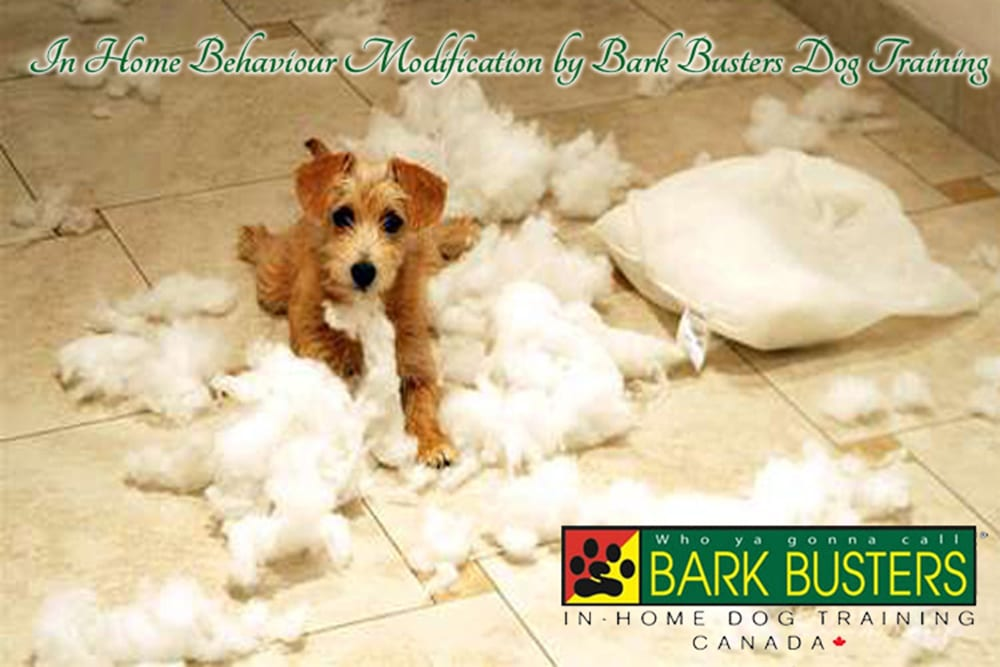In Home Behaviour Modification by Bark Busters Dog Training