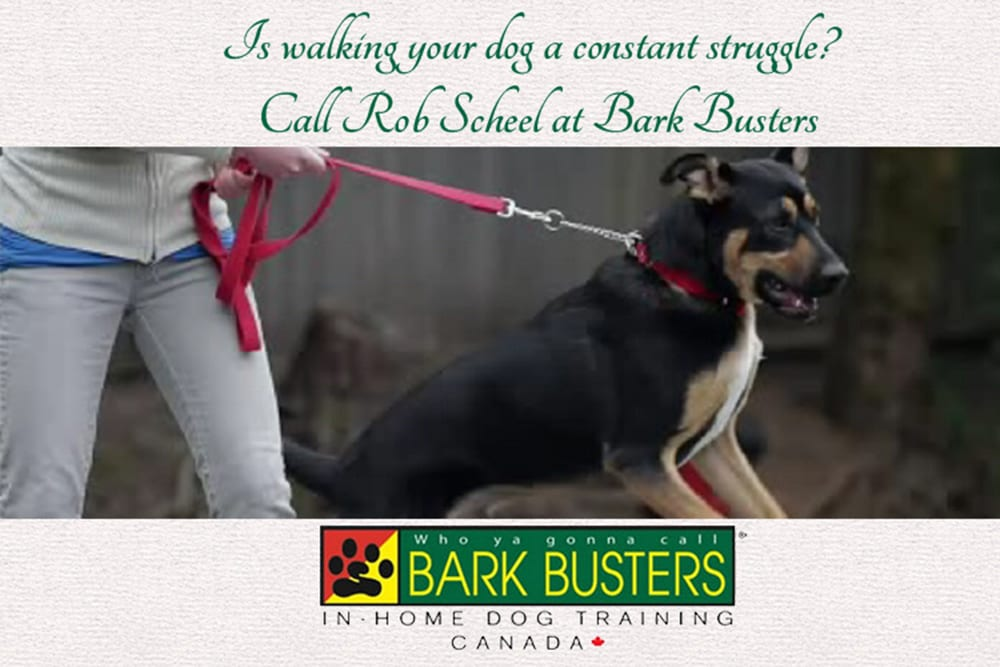 Is walking your dog a constant struggle ~ call Rob Scheel at Bark Busters