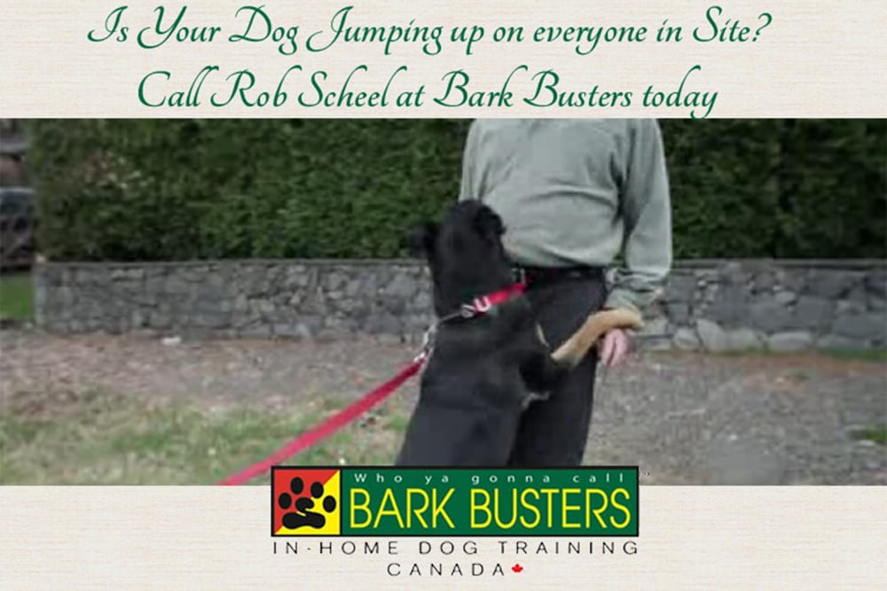 Is your dog jumping up on everyone ~ call Rob Scheel at Bark Busters today