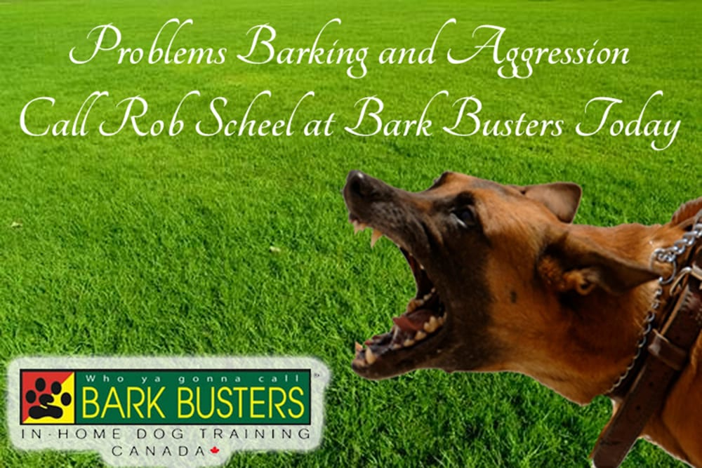 Problems with barking and aggression ~ call Rob Scheel at Bark Busters today