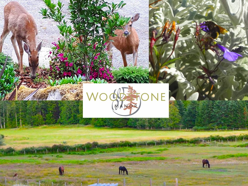 Deer, Horses and Honey Bees, oh my, at Woodstone Manor on Galiano Island