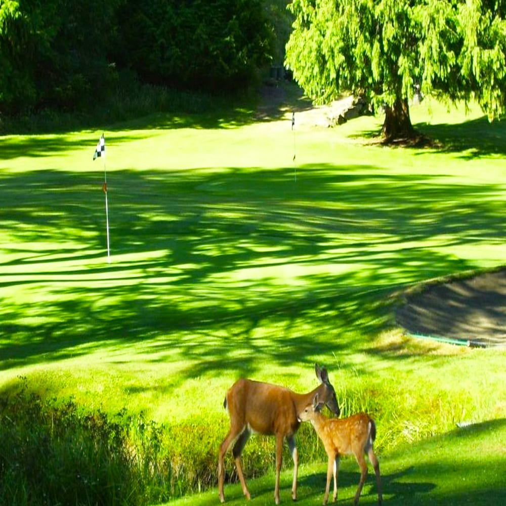 Natural Wildlife on Galiano Golf and Country Club